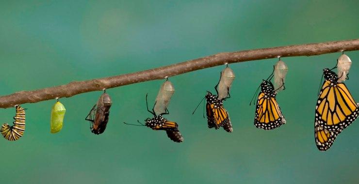 Transformación y trascendencia