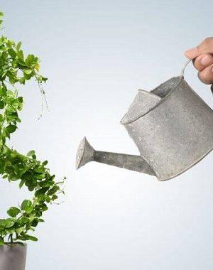 madurez financiera