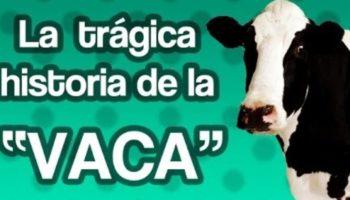 vaca-Tuestima-Videos