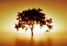 Consejos para conseguir la prosperidad y abundancia