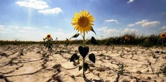 Resiliencia, resistir y fortalecerse ante lo adverso ¿cómo lograrlo?
