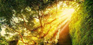 sendero de la luz en otros