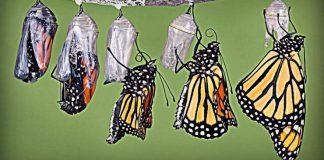 De crisálida a mariposa-Tuestima-Espíritu-Crecimiento espiritual